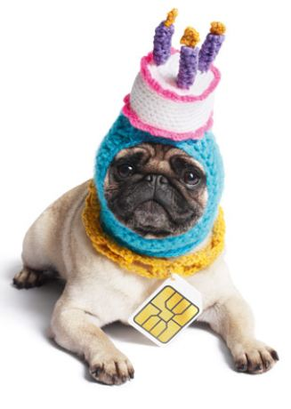 Pug Birthday Cake Hat