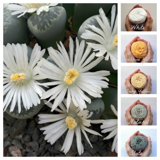 Vinnis colour palette cactus daisies
