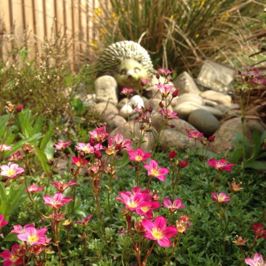 pink flowers and hedgehog garden ornament