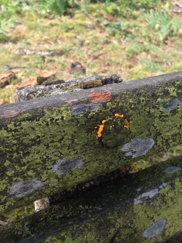 Bright orange insect eggs on a bench