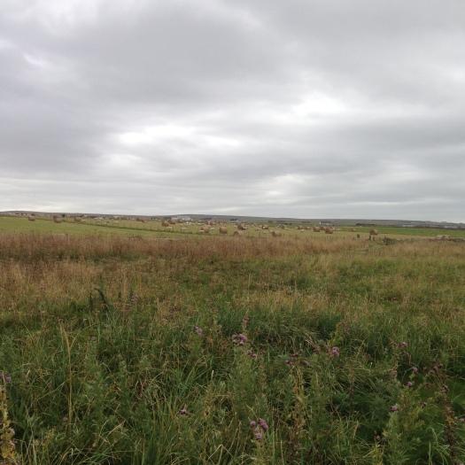 Farmland at John O'Groats